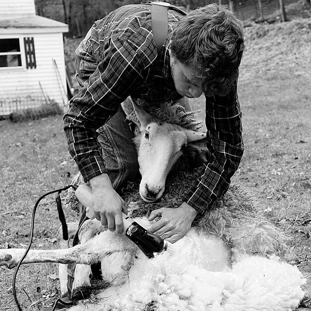 My Local Wool