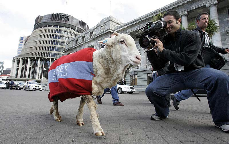 FPR96341. Shrek the sheep meets the media while he waits for New Zealand Prime Minister Helen Clark, at Parliament, Wellington, New Zealand, May 03, 2004. The celebrity sheep was recently shawn on TV shedding six years of wool. MANDATORY CREDIT ©FOTOPRESS/Anthony Phelps.